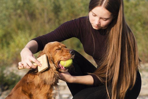 cepillos para perro