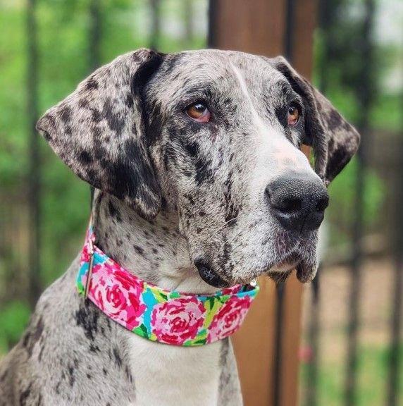 collar para perros