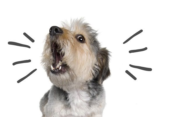 Collares anti ladridos para perros